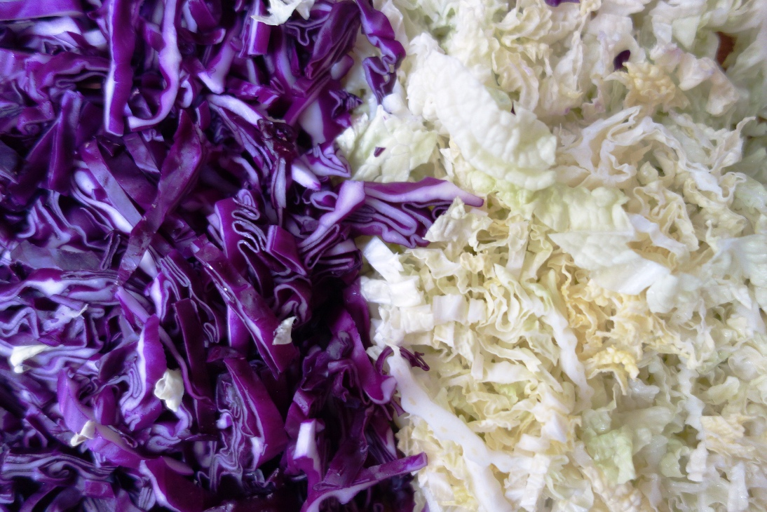 Red cabbage and Chinese cabbage
